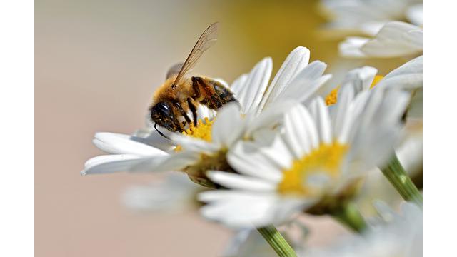 V.I. Bees
