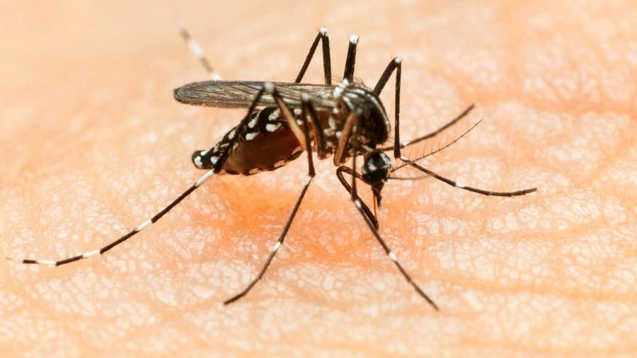 Person catches Zika via sex in US