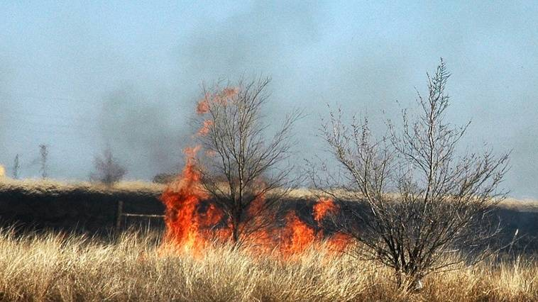 Two Alabama men arrested for setting wildfires