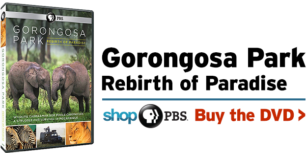 Shop PBS: GORONGOSA PARK Rebirth of Paradise (DVD)