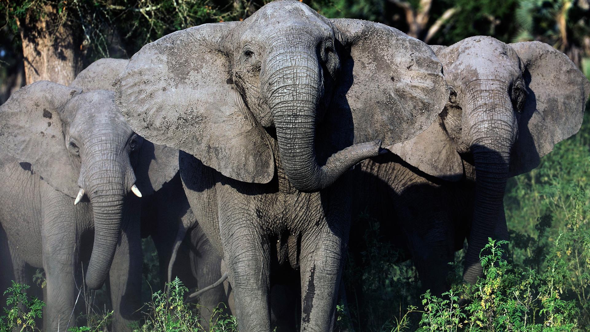 Episode 2 | Elephant Whisperer