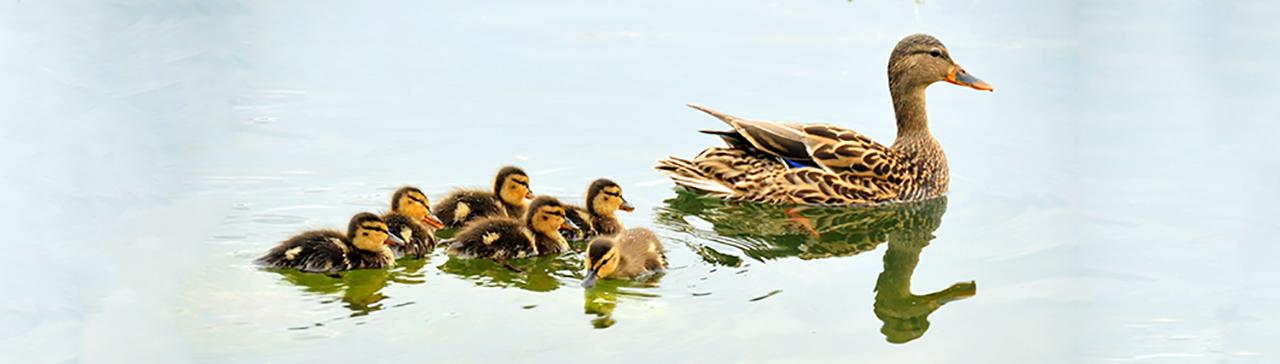 DuckHeader2.png