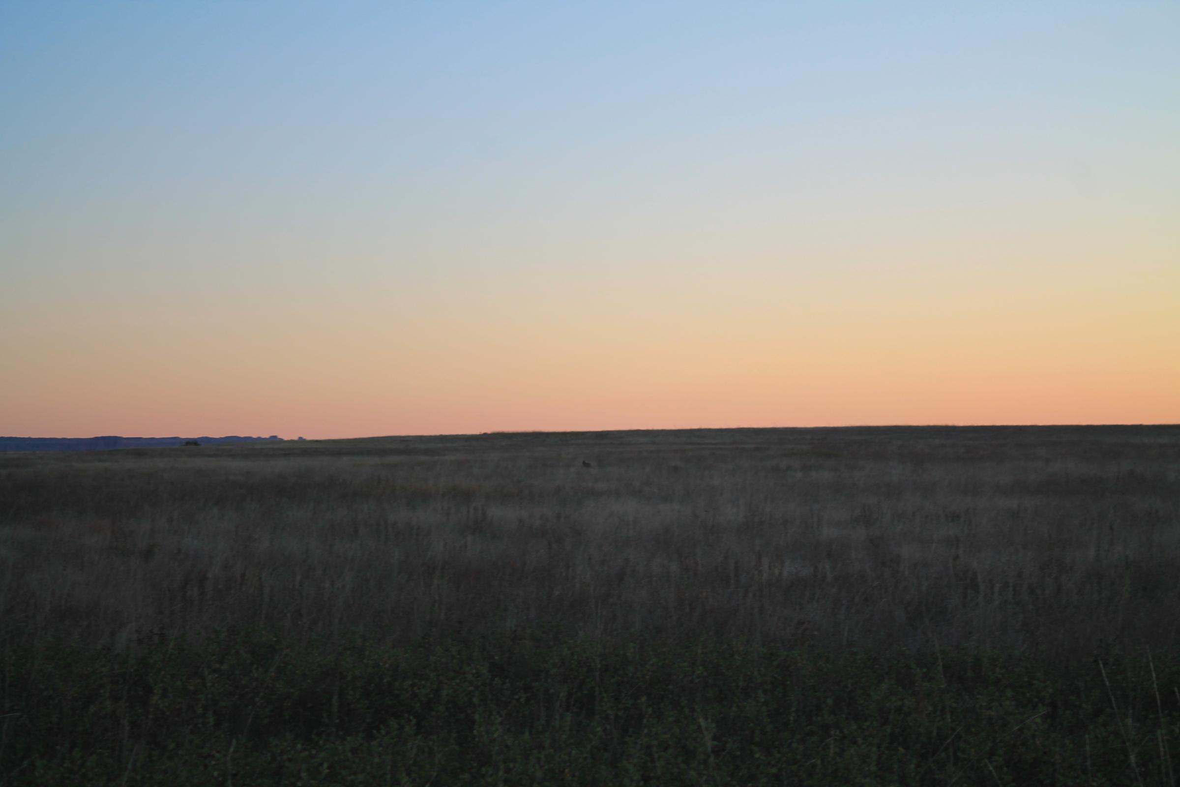 A coyote crosses the prairie at dawn.