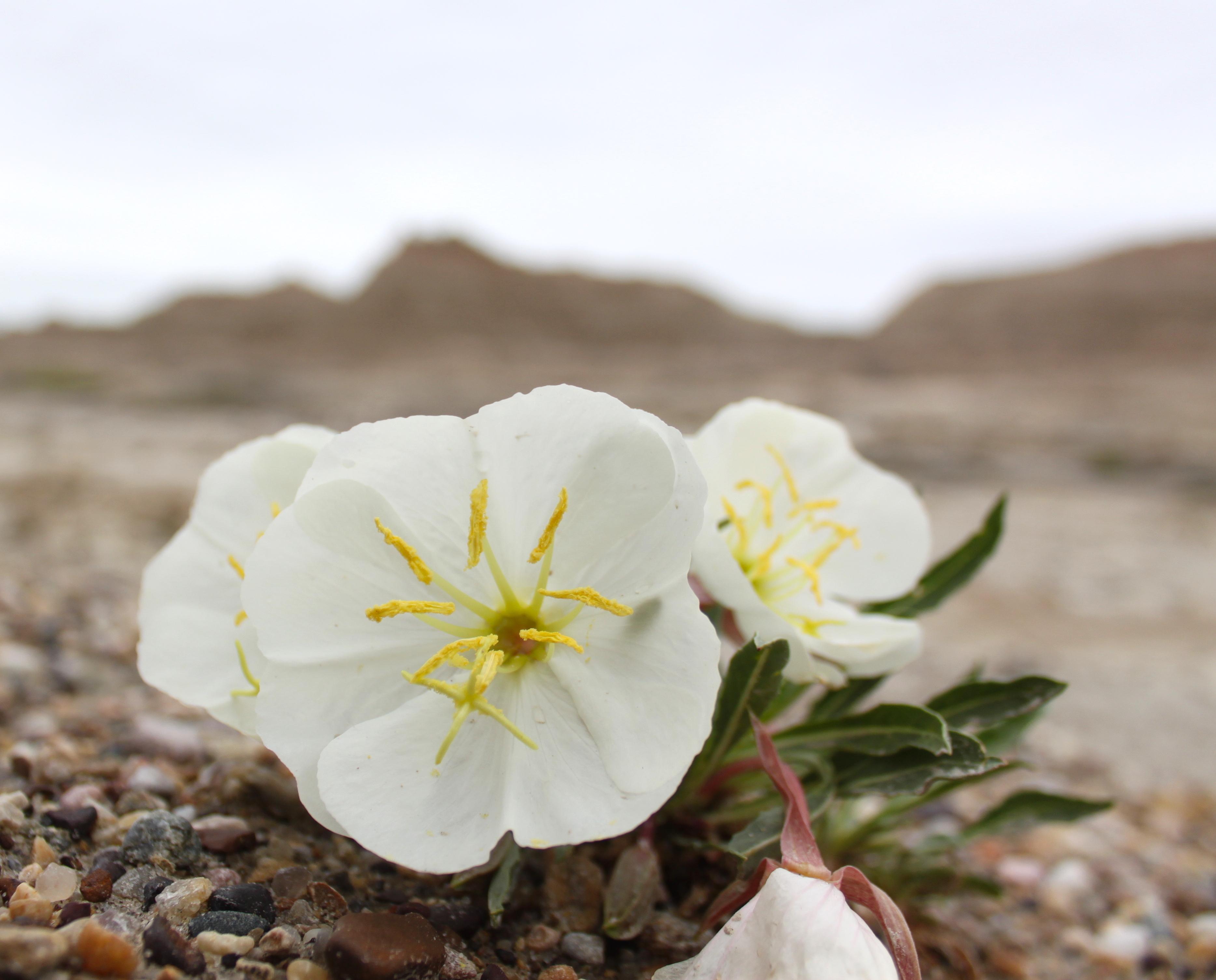 wildflower4.JPG