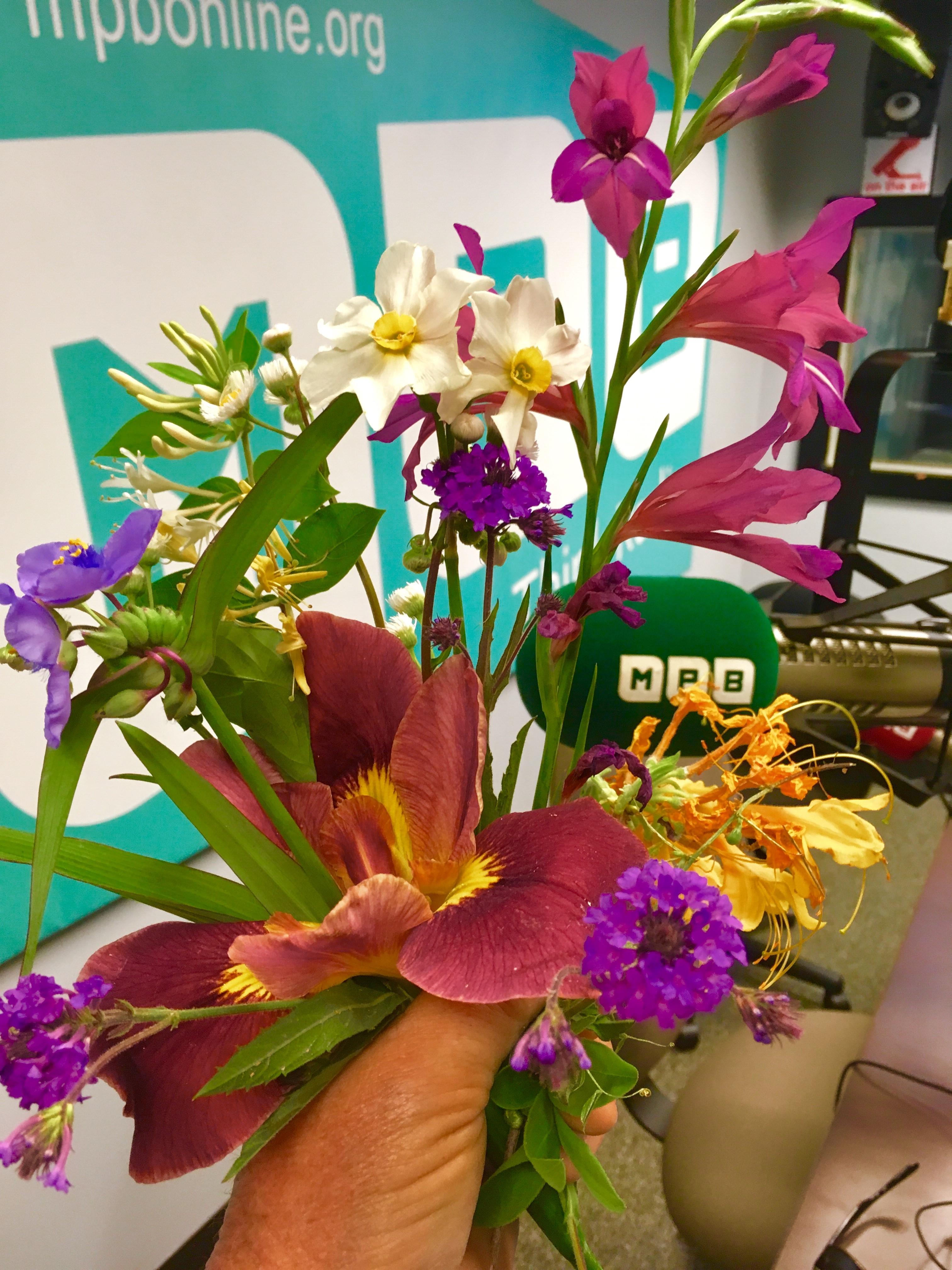 "Hardy gladiolus, spiderwort, honeysuckle, ""twin sisters"" daffodil, and the Louisiana iris named Professor Neal Odenwald"