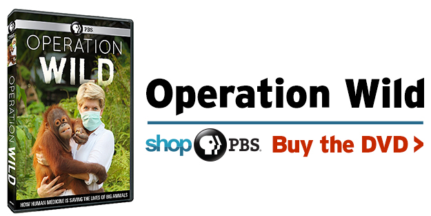 Shop PBS: Operation Wild (DVD)