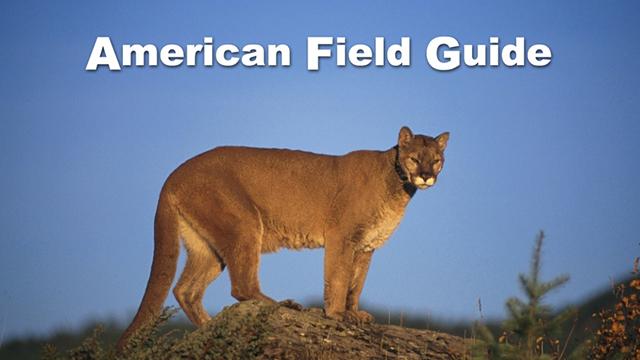 body_american-field-guide_1.jpg