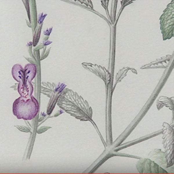 Botanic Arts
