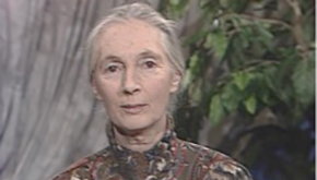 Jane-Goodall,-endorsement-1994-290.jpg