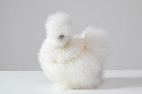 cute-fluffy-animals-22.jpg