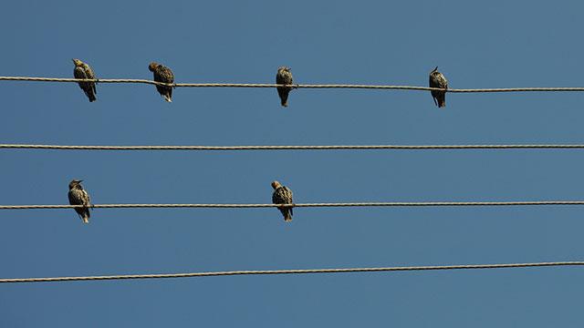 Early Birds