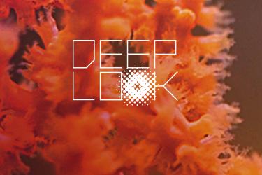 deeplook-1.png
