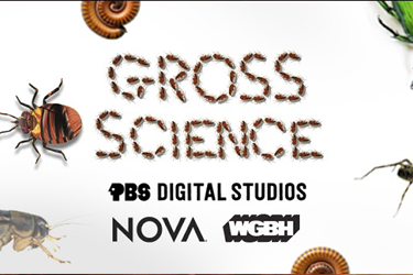 grossscience.png