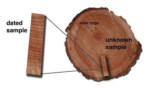 Tree ring dating activity