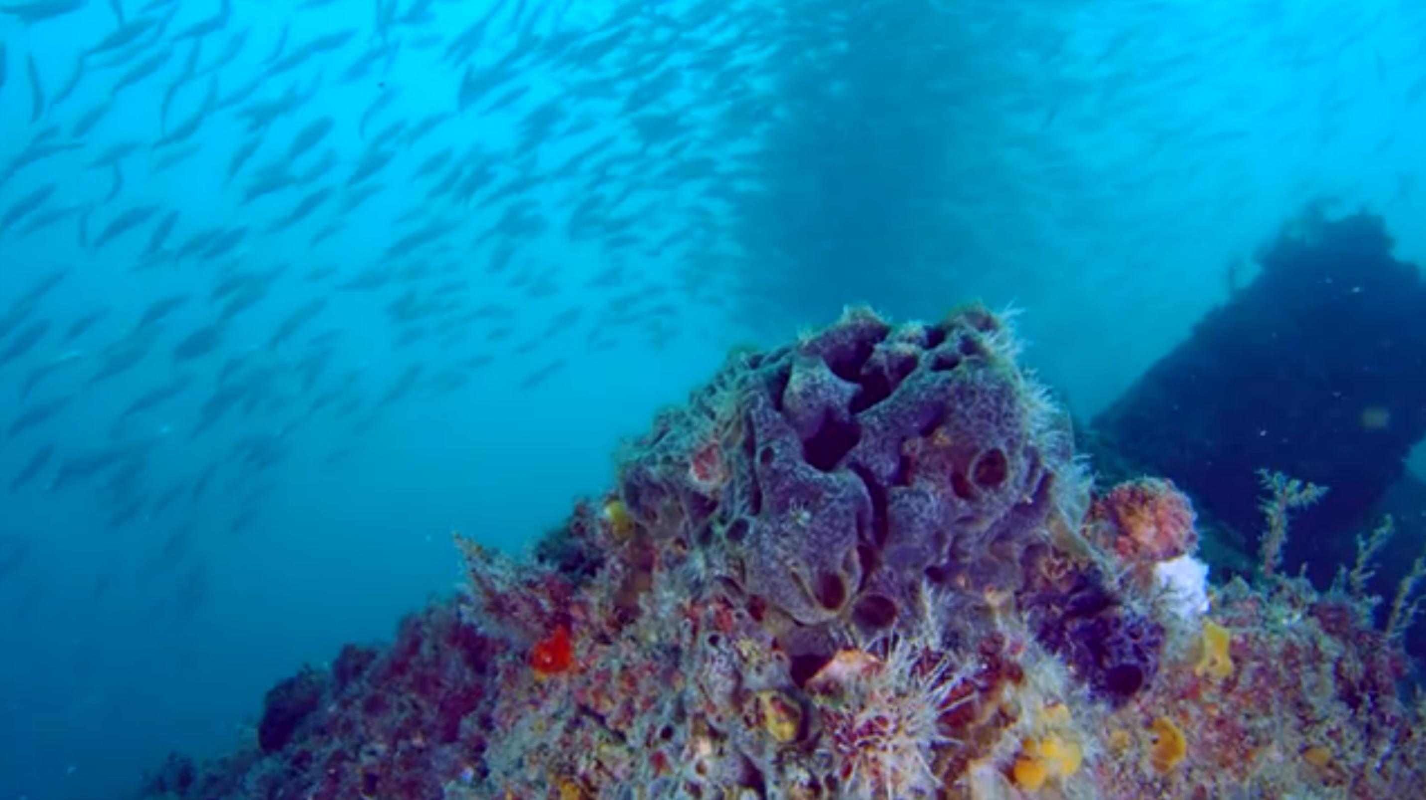 Paradise Reef