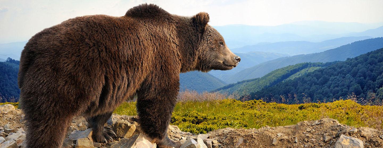 Home Wild Alaska Live Pbs