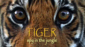 Tiger - Spy in the Jungle Image
