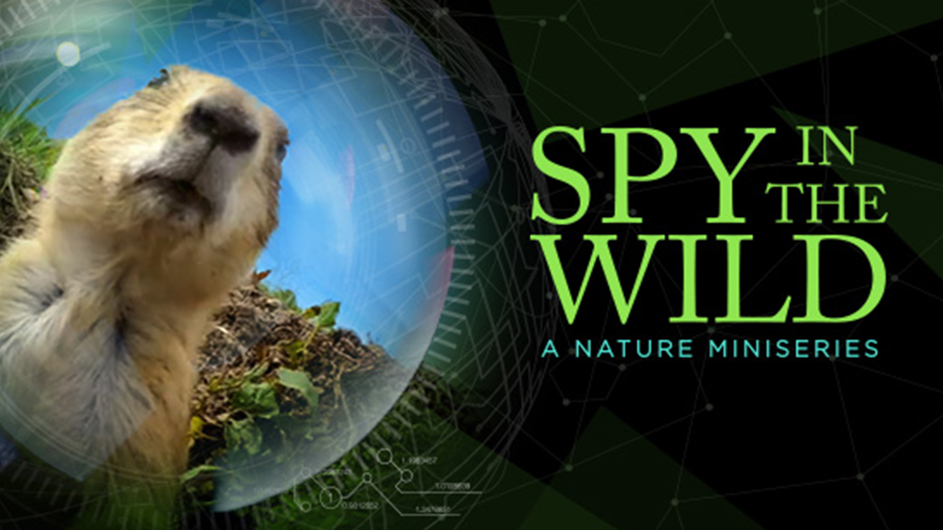 Spy in the Wild: Meet the Spies