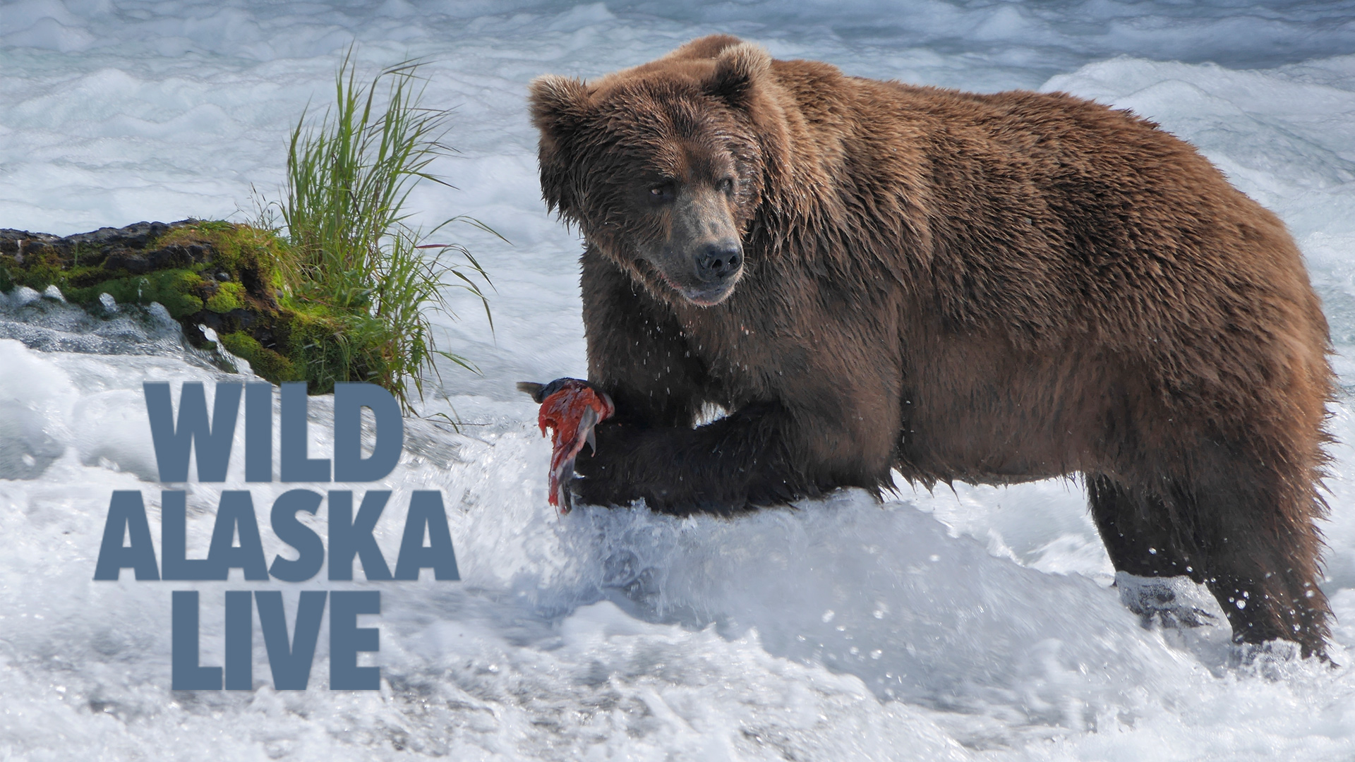 Wild Alaska Live - 2 of 3