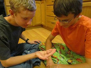 Garret Jolma shows his brother, Braden, a Walking Stick, an insect that is part of his 4-H collection