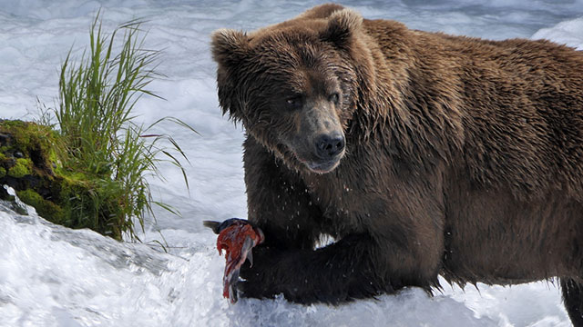 Wild Alaska Live: Part 1