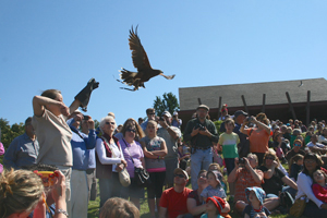 Raptor released by handler.
