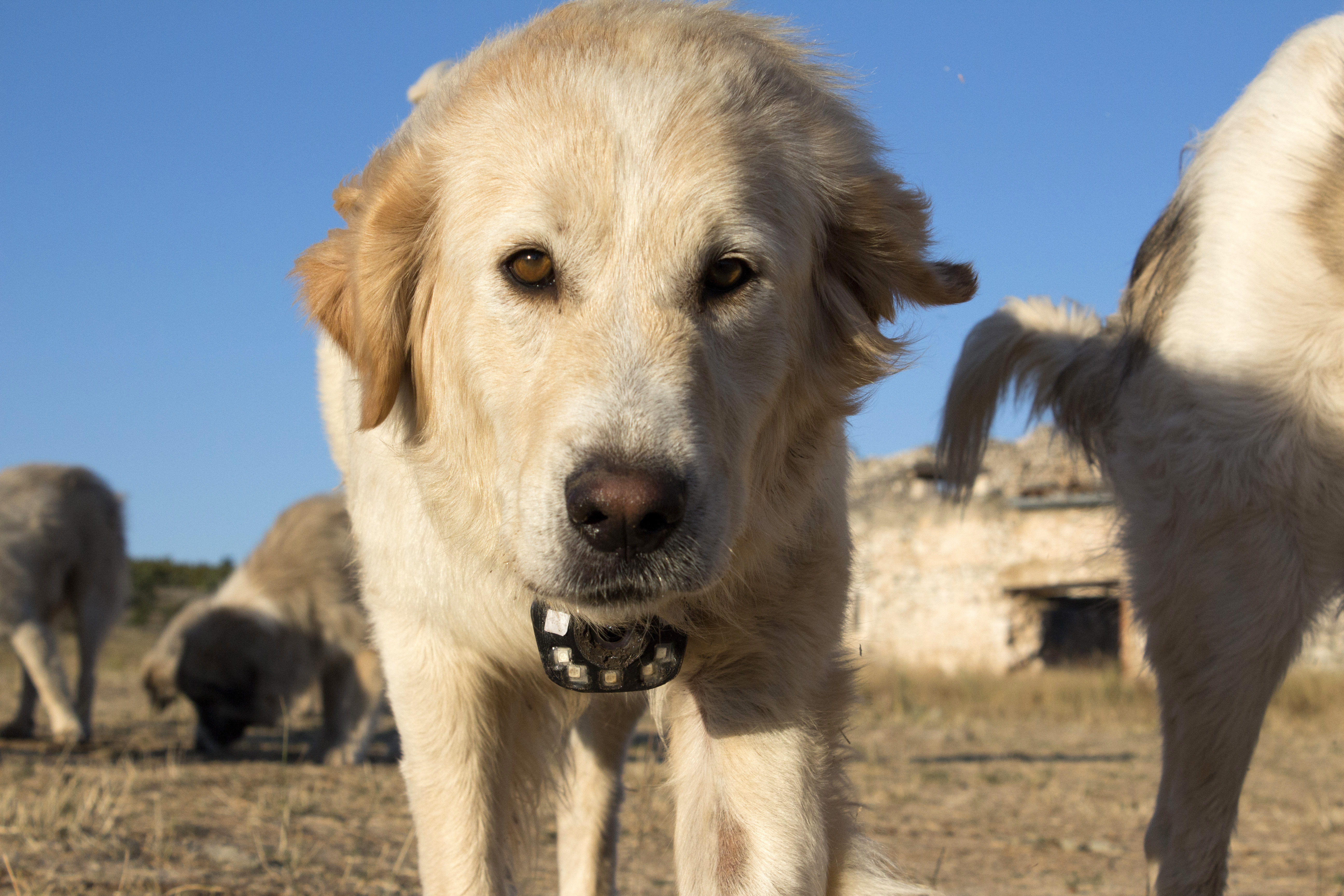 Animals with Cameras, A Nature Miniseries ~ Monday at 8pm