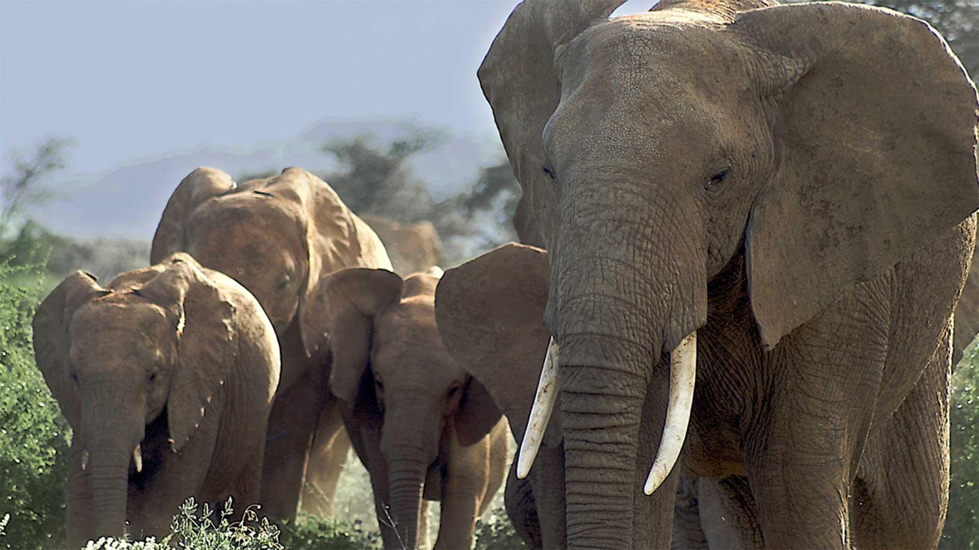 Great Rift - Africa's Wild Heart