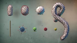models of viruses