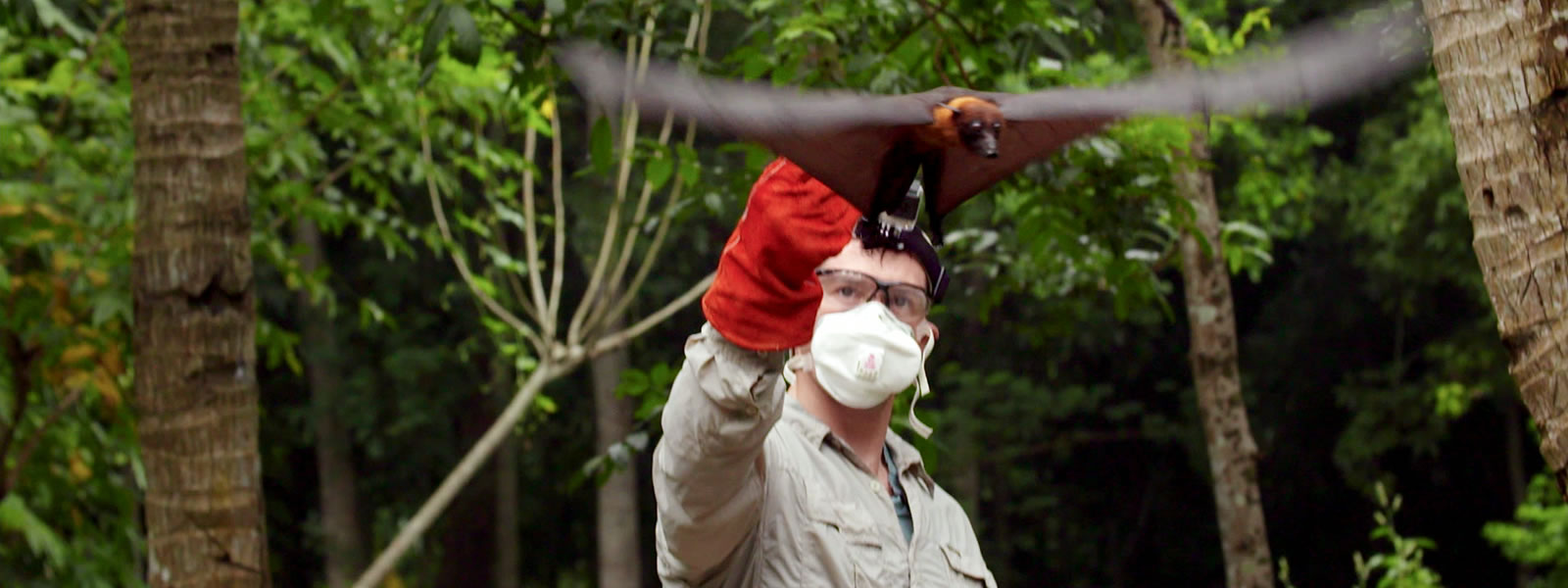 man releasing a bat in the jungle