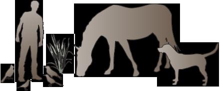 illustration of birds, human, plant, horse, dog