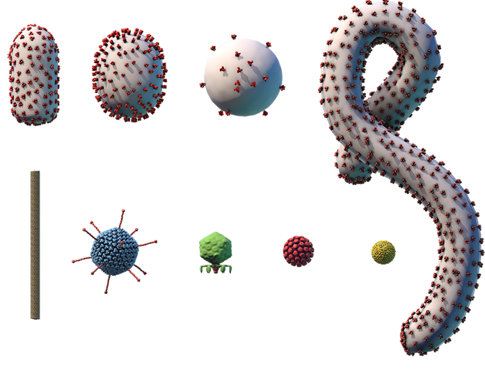 Chart showing size comparison of different viruses.