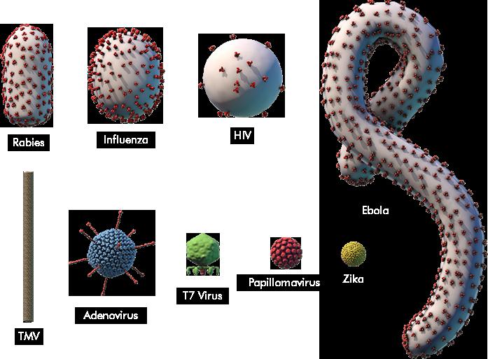 Virus Explorer | Spillover – Zika, Ebola & Beyond | PBS