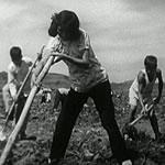 3 people tilling soil