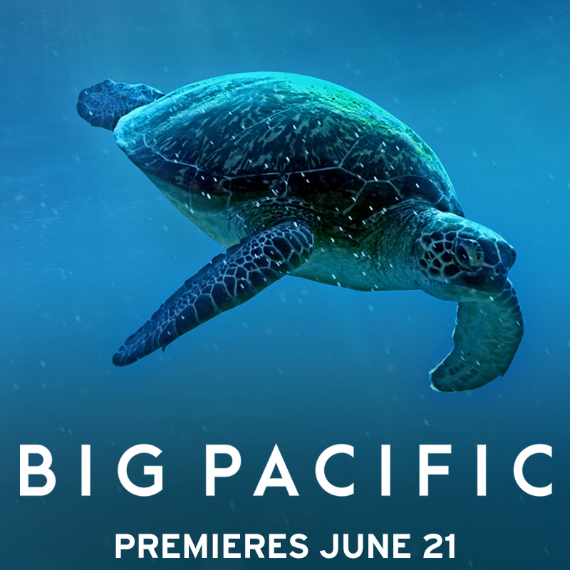 Big Pacific