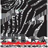 Image - zebra coalition (strand 2).png