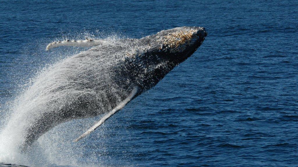 BBL_humpback-whale.jpg