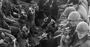 storymaker-dogs-military-1205287-514x268.jpg