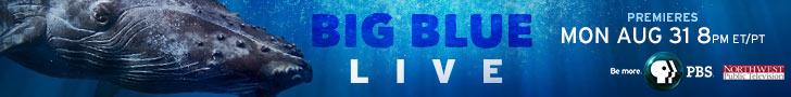 BigBlueLive Premiere Banner.png