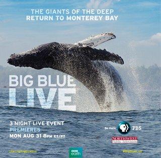 Blue Live.jpeg