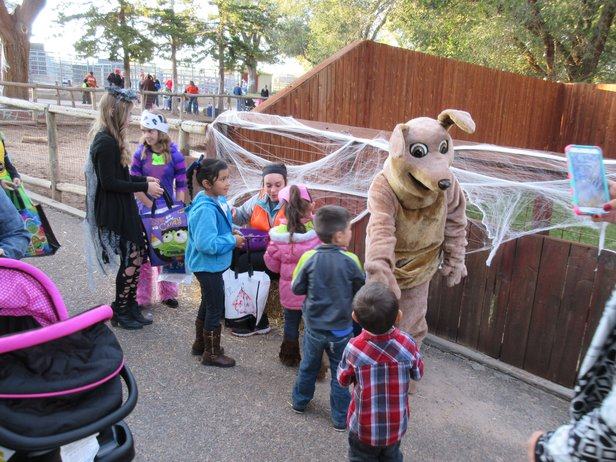 Amarillo Zoo's Boo at the Zoo is Friday through Sunday.