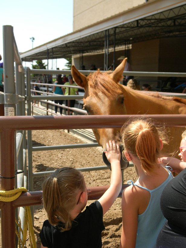 Young girls pet a quarter horse at last year's National Day of the Cowboy. This year's celebration is Saturday.