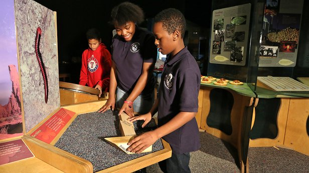 """Nature's Numbers"" at Don Harrington Discovery Center"