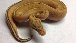 Tri-State Reptile Expo