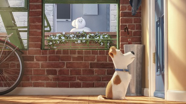 "Max (Louis CK) waits for his owner to return home in ""The Secret Lives of Pets."""