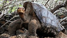 Lonesome George and the Battle for the Galapagos