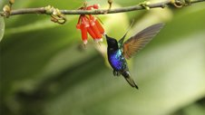 Nature | Hummingbirgs: Magic in the Air
