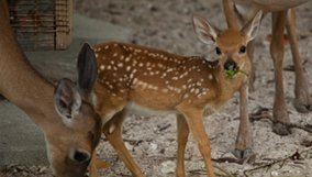 Nature | The Private Life of Deer