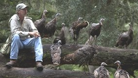 nature_blog_my-life-as-a-turkey.jpg