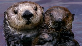 nature_blog_saving-otter-501.jpg